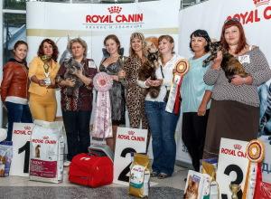Выставка кошек клуба Демарис, сентябрь 2014